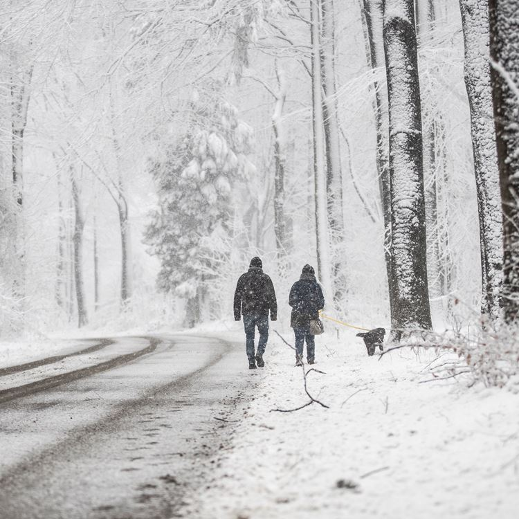 Winterpuzzelwandeling